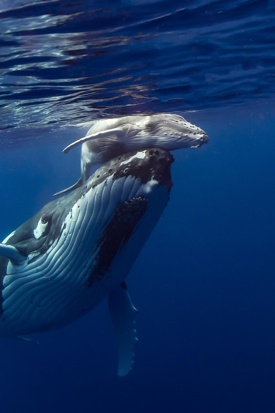 Protect Whales