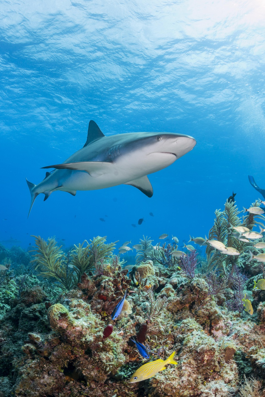 Protect Sharks