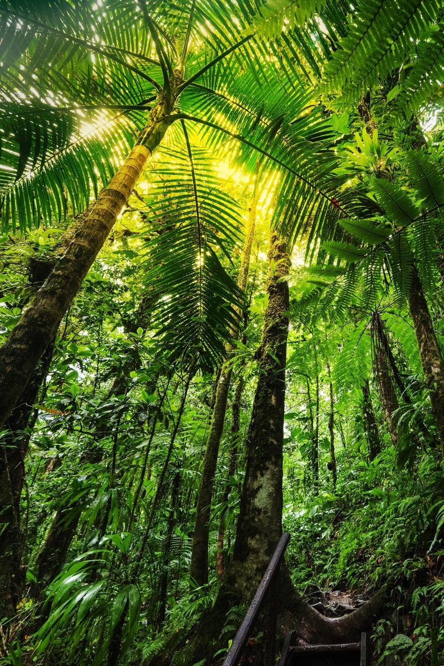 Preserve Rainforests